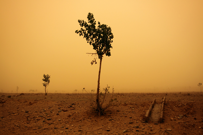 Brownout sky from blowing dust, a sickly tree being shredded in the wind, and rock-strewn waterless ground.  Photo by Sean Gallagher.