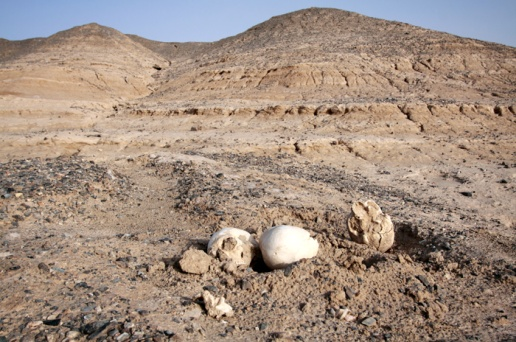 Parched hills of Yinpan. Soil erosion has uncovered a few skulls in the foreground.  Photo by Sean Gallagher.