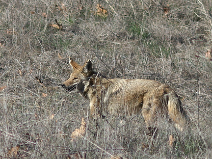 coyote-Satwiwa-Waterfall-Trail-2011-12-26-IMG 3745