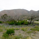 Pt-Mugu-trailhead-view-1yr-after-fire-2014-05-19-IMG 3625
