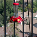 giant-swallowtail-butterfly-Papilio-cresphontes-at-hummingbird-feeder-2015-07-06-IMG 1010