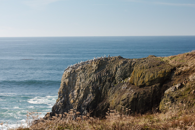 Oregon-coast-2014-11-08-IMG_0251..jpg